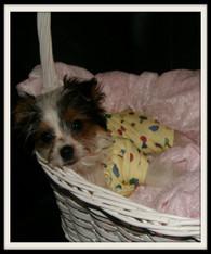 Dog Pajamas, Puppy Pj's