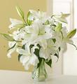 White Stargazer Lilies
