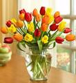 Harvest Tulips 30 Stems