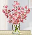Modern Pink Cymbidium Orchids