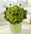 Froggy Flower Pail