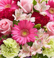 Florist Grower's Choice (Medium)