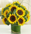 SunSational Sunflowers Deluxe