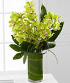 Green Cymbidiums