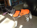high visibility for your dogs, mesh jacket