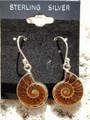 Ammonite Earrings 004