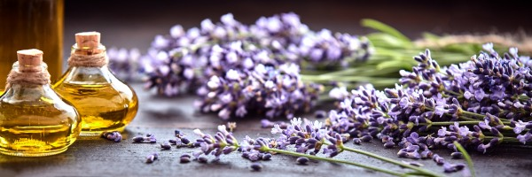 Lavender Collection - All Natural