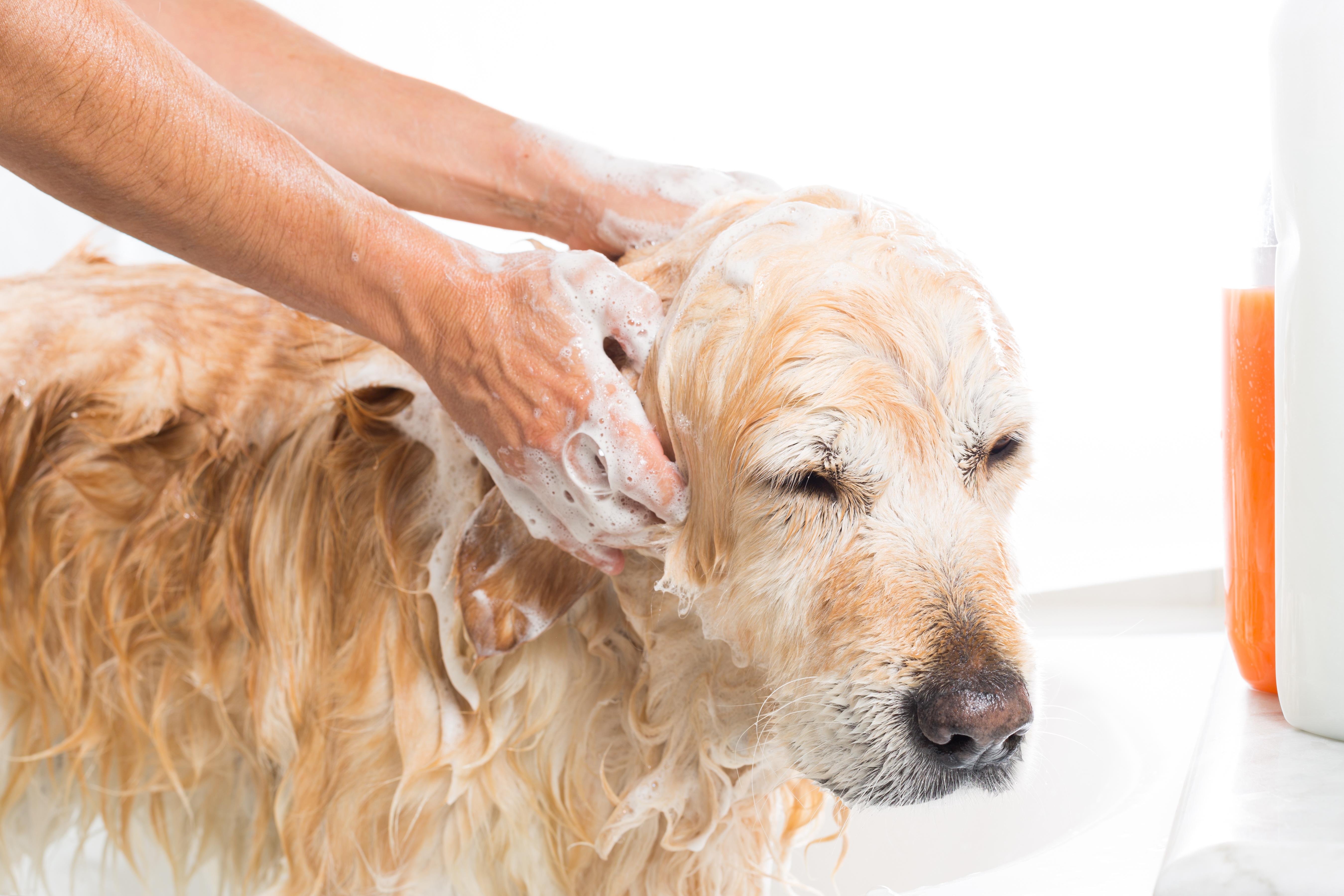 pet-soap.jpg