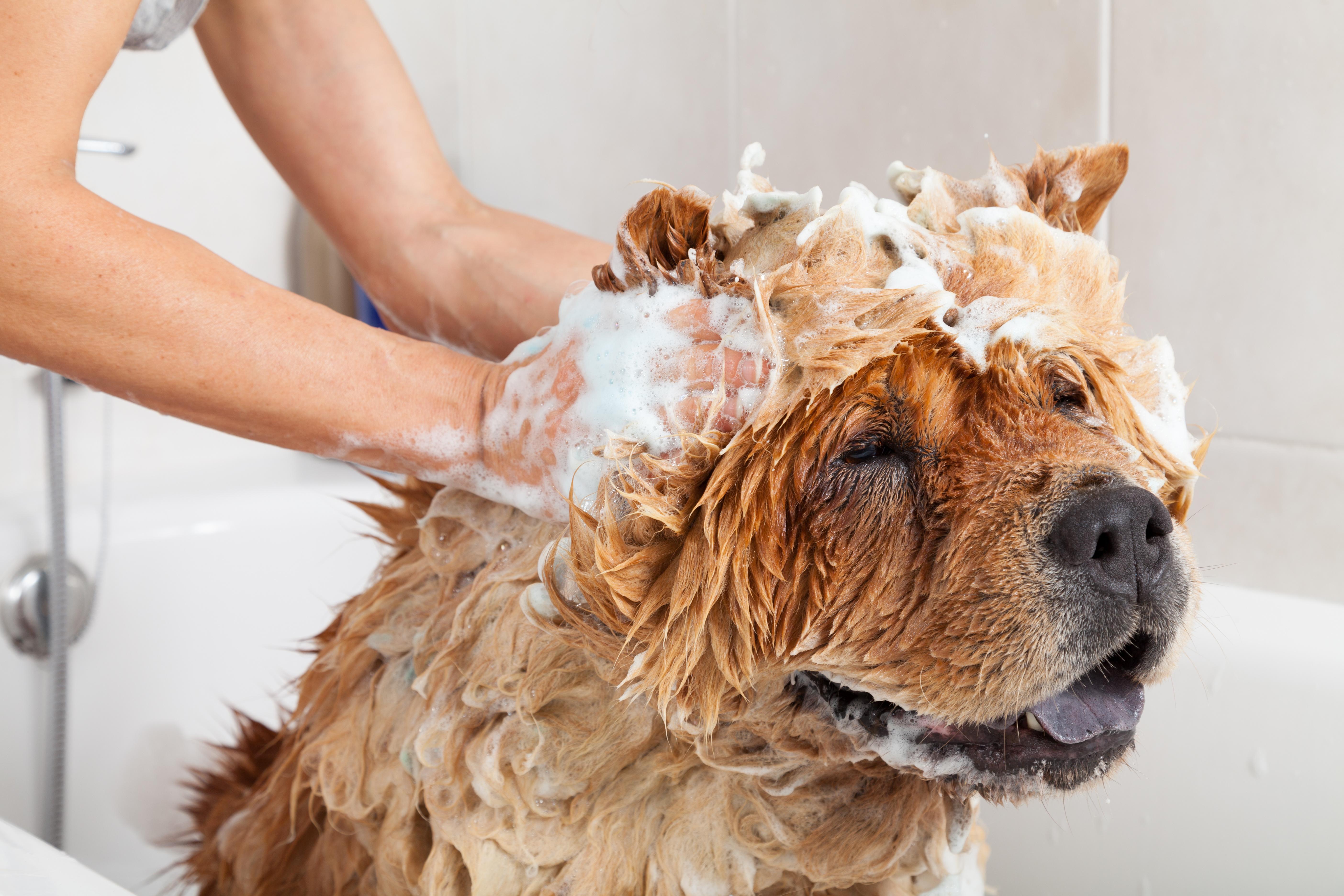 pet-soap2.jpg