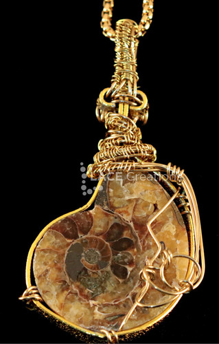 Ammonite Fossil Gold