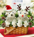 Christmas Floral Puppy 003