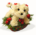 Christmas Floral Puppy 006