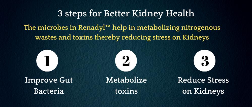 renadyl-kidney-health-supplement-banner2.png