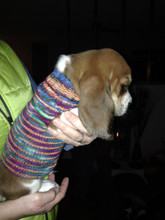 Free pattern download for a dog sweater for a female dog.