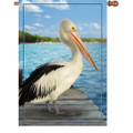 American White Pelican  : Illuminated Flags