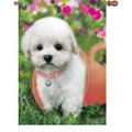 Puppy Love (Dog)  : Illuminated Flags