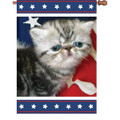 Patriotic Kitty : Illuminated Flags