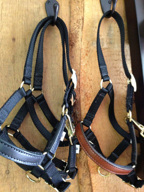 Leather Overlay Adjustable Mini Halters