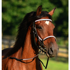 Quick Change HALTER BRIDLE with Snap On Browband made from BETA BIOTHANE (ANY 2 COLOR COMBO)