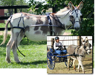 Traditional Mini Donkey/Mini Mule Driving Harness