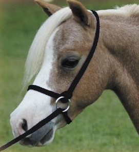 Mini Foal Halter All Miniature Horse Supplies By Mini Horsefeathers