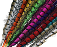 Bleached & Dyed Lady Amherst Pheasant Feather Tails (30-35)