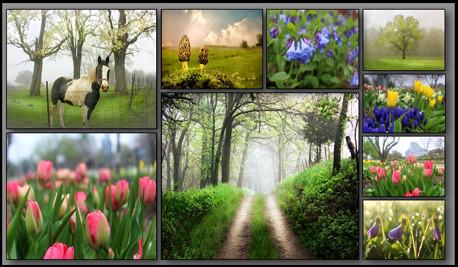 spring-3x1.75.jpg