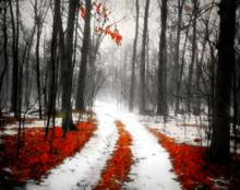 Into the Woods, Amana, IA