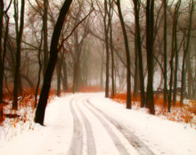 Foggy Trail, Coralville, IA