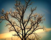 Tree of Light, Iowa City, IA