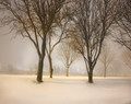Trees in Night Time Snow Fall, Coralville, IA