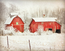 Two Red Barns in Morning Snowfall, Johnson Co, IA