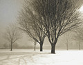 Trees in Nighttime Snowfall 2, Coralville, IA