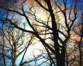 Stained Glass Trees, Iowa City, IA