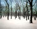 Walnut Grove with Blue Sky, Amana, IA