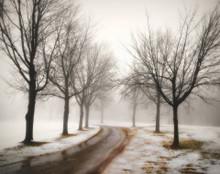 Trees in Winter Fog, Iowa City, IA
