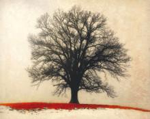 Wild Oak in Red Grass, Amana, IA
