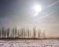 Trees in Soft Winter Haze, Amana, IA