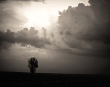Lone Tree on Stormy Afternoon, Benton Co. IA