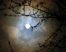 Velvet Moon, Amana, IA