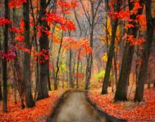 Orange Trail, McGregor, IA