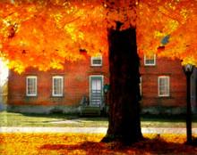 Autumn in Amana #3