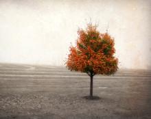 Orange Tree in Autumn Fog, Amana, IA