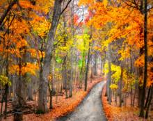 Autumn Path, McGregor, IA