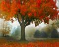 John's Tree, High Amana, IA