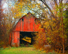 Red Barn in Yellow Foliage, Tiffin, IA  (Barn is no longer with us)