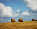 Bales and Blue, Williamsburg, IA