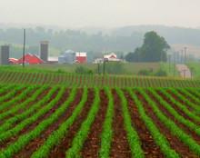 Spring Rows, Rural Iowa County, IA