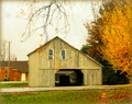 South Amana Barn in Yellow Foliage, South Amana, IA