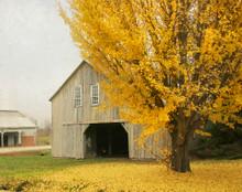 Barn in Yellow Foliage #4, South Amana, IA